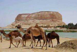 واحة سيوة، الصحراء الغربية