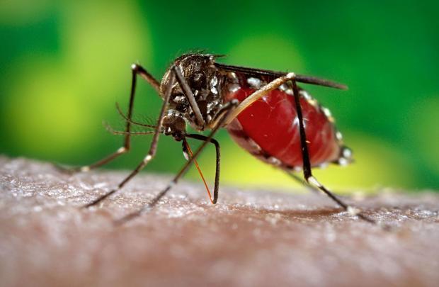 دراسات تكشف فعالية وجدوى لقاح زيكا فى الوقاية من العدوى