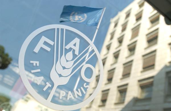 «فاو» : مصر تدير قطاع الحبوب بكفاءة للحفاظ على الأمن الغذائى