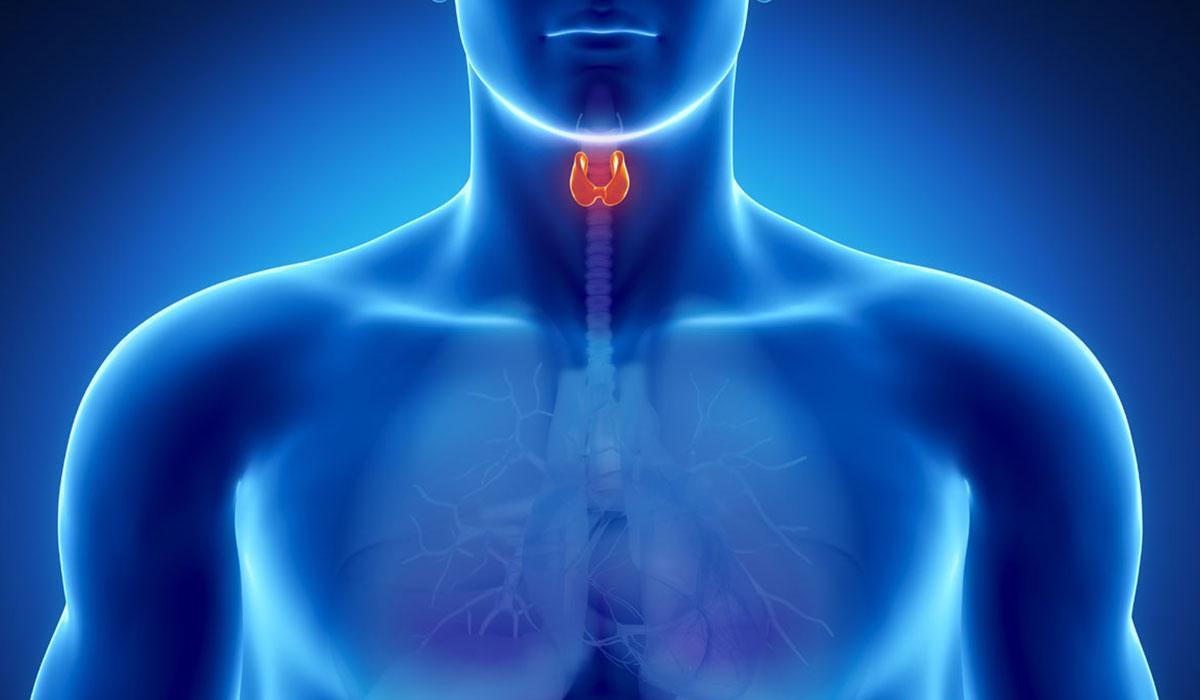 دراسة أولية تشير إلى دور العلاج الهرمونى للغدة الدرقية فى شفاء الرئة