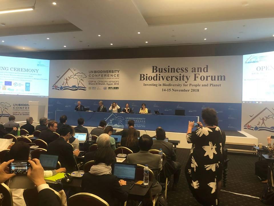 مسؤول أممي : إلتزام شرم الشيخ بحماية البيئة وراء اختيارها لاستضافة مؤتمر التنوع