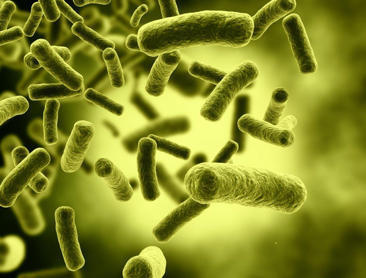 دراسة : البكتيريا المفيدة في الجسم يمكن أن تساعد في زيادة كثافة العظام