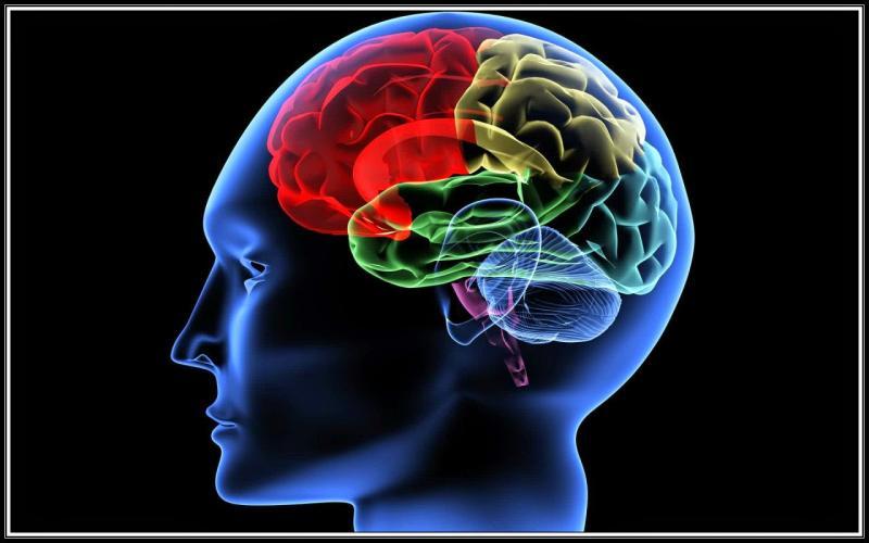 دراسة تشير لارتباط التوتر والصدمة مبكرًا بانخفاض حجم منطقة الحصين بالمخ