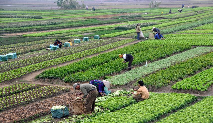 «الزراعة» تكثف المرور الميداني على الزراعات الشتوية بالجيزة والفيوم