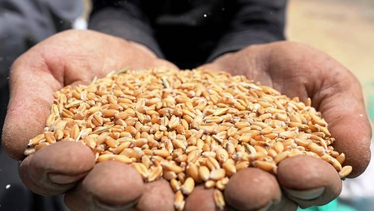 «السلع التموينية» : طرح مناقصة لشراء كميات غير محددة من القمح يناير المقبل