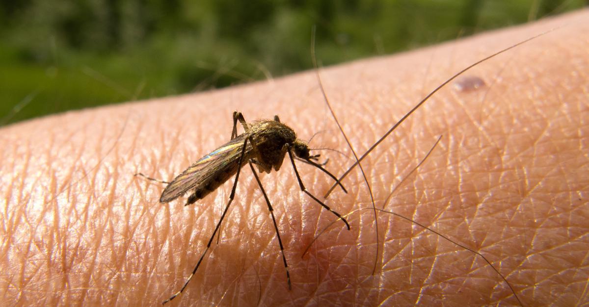 العقاقير المكافحة للبعوض تقلل من الإصابة بالملاريا بين الأطفال