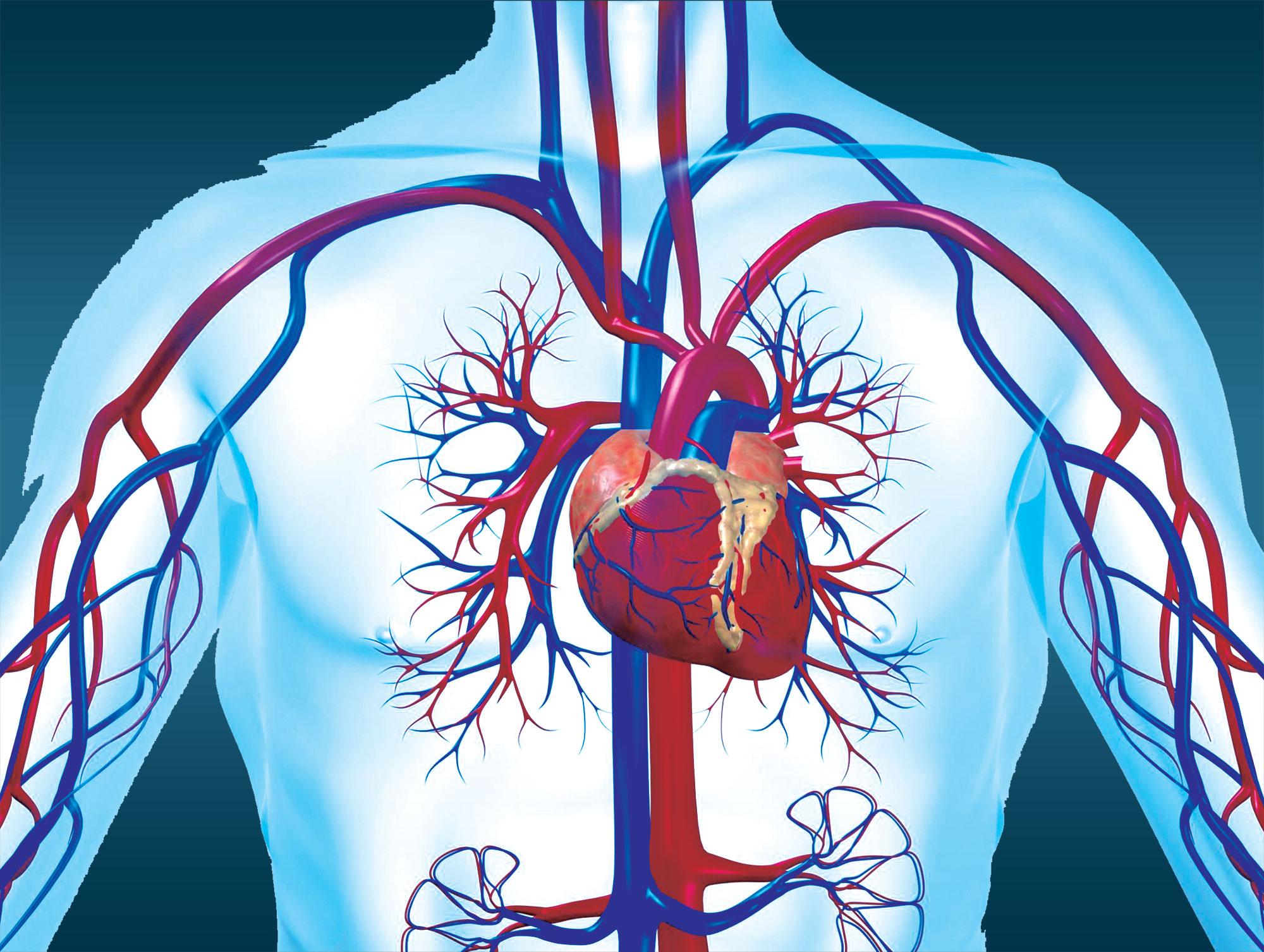 تثبيط جينات أمراض القلب يمنع تراكم الدهون على الشرايين