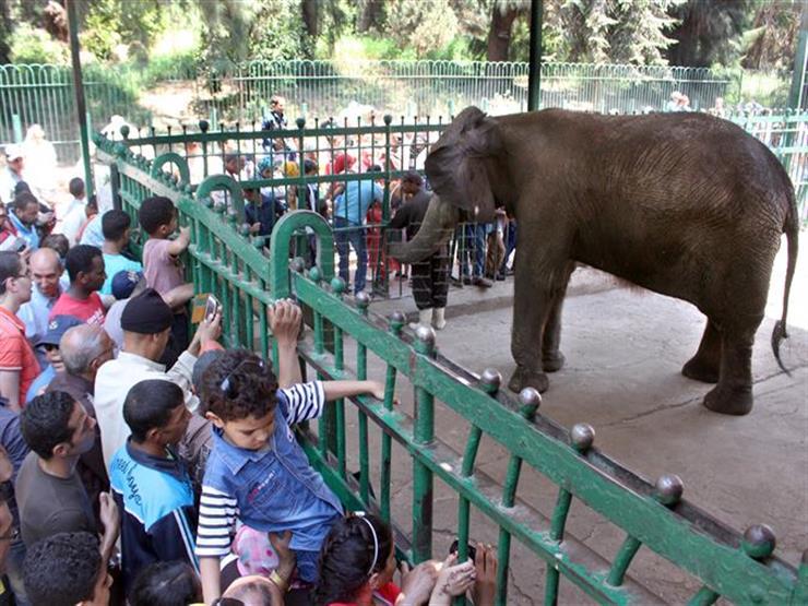 وزارة الزراعة : حديقة الحيوان تستعد لاستقبال المواطنين خلال إجازة نصف العام