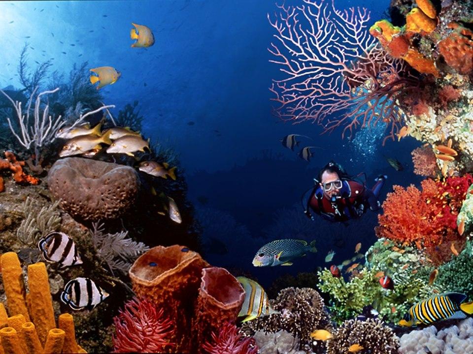 البحر الأحمر من افضل 5 أماكن لعشاق الغوص والرياضات المائية في العالم