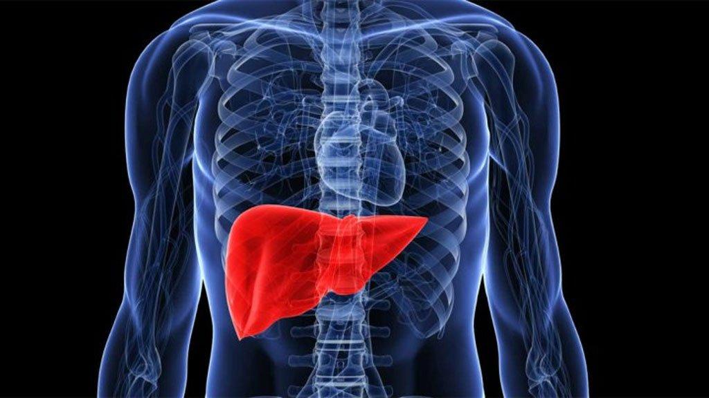 دراسة: الكبد التالف قادر على التعامل مع عقاقير علاج السكر