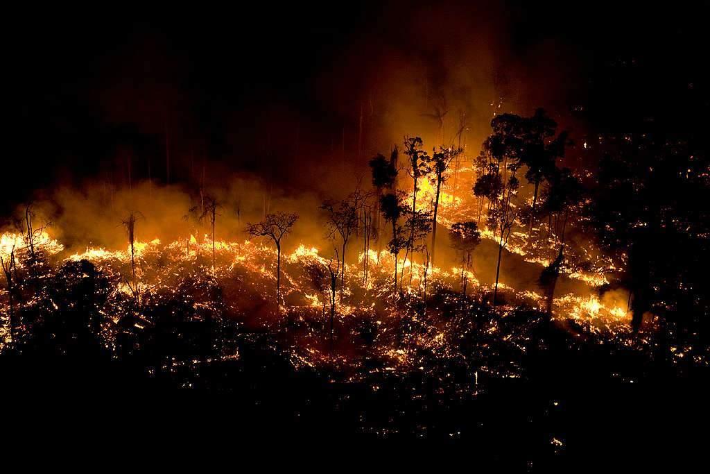 حرائق غابات الأمازون تهدد رئة كوكب الأرض