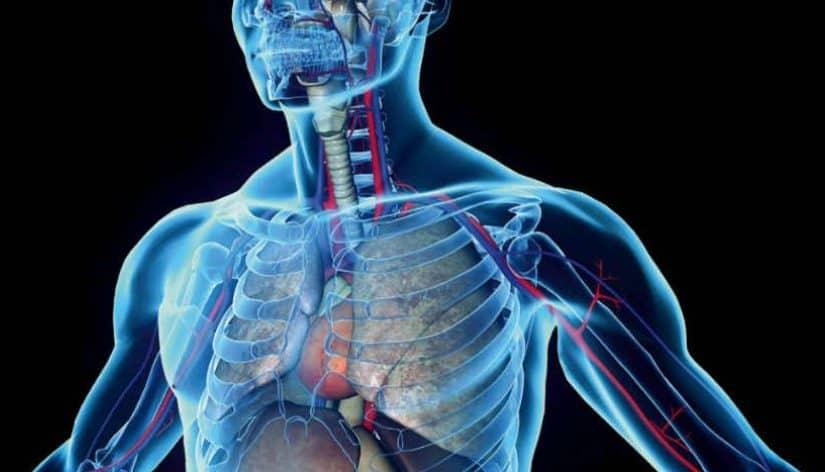 علماء دوليون يطلقون مشروعا جديدا يساعد على رسم خريطة لكل خلايا جسم الإنسان