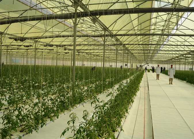 الزراعة2