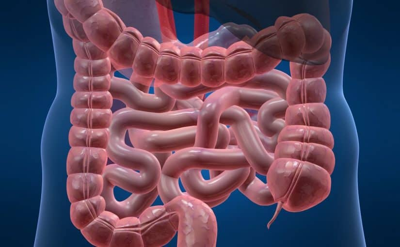 دراسة : استهلاك السكر يزيد من خطر الإصابة بالتهاب الأمعاء