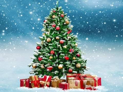 تعرف على اصل شجرة عيد الميلاد