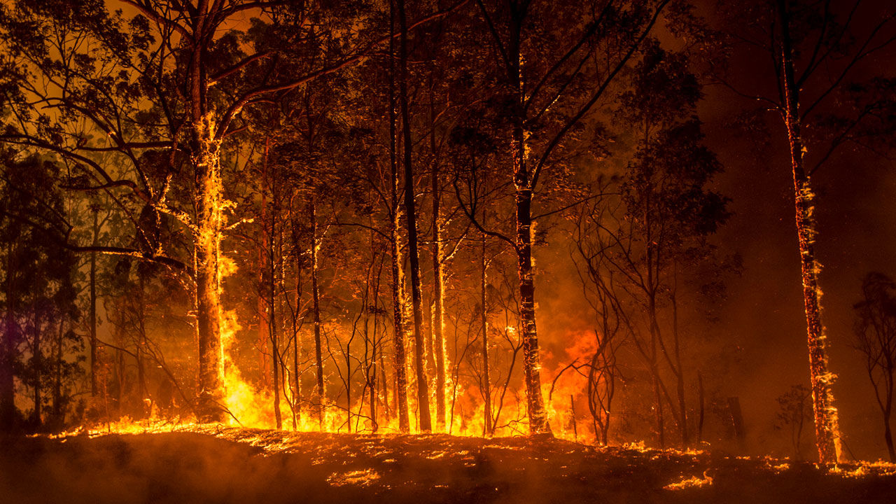 سلطات ولاية نيو ساوث ويلز الأسترالية تعلن الطوارئ جراء الحرائق