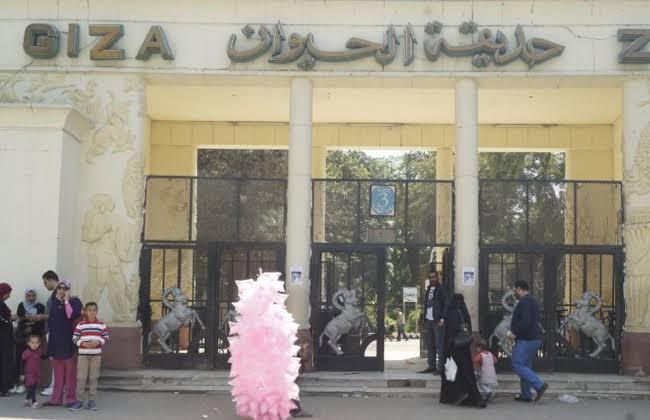 غدا.. حديقة الحيوان تفتح أبوابها للزوار بعد غلقها 6 أشهر