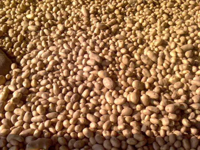 الزراعة: ارتفاع الصادرات الزراعية لـ 3.9 مليون طن والبطاطس تحتل المركز الثانى