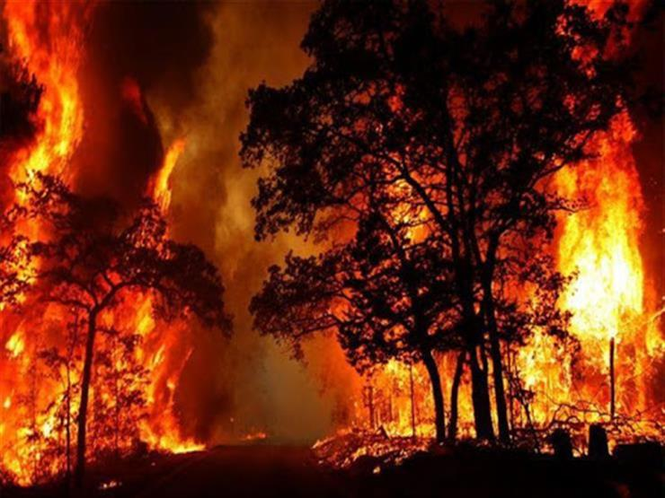 مصرع 11 وإصابة 17 آخرين إثر حرائق غابات فى لوهانسك شرق أوكرانيا
