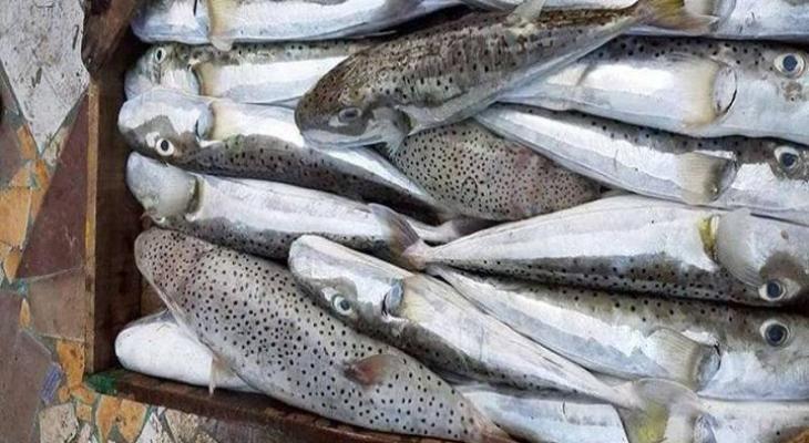شرطة التموين تضبط 290 كيلو من أسماك «الأرنب السامة» قبل طرحها في الأسواق
