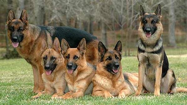 عقوبة اقتناء كلب بدون ترخيص